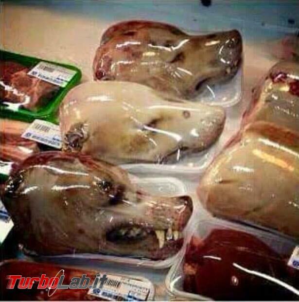 Carne cane vendita Roma: bufala vecchia non fa buon brodo! - 107587496_10223037318710956_8371260436919098680_n