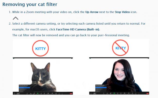 """Dopo gaffe Avvocato-Gatto, Zoom aggiunge pagina come rimuovere """"cat filter"""" - FrShot_1613469408_"""
