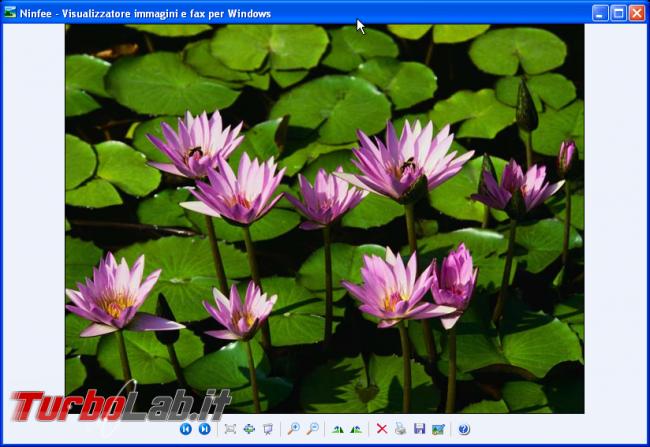storia Windows, anno 2001: Windows XP - windows xp visualizzatore immagini e fax per Windows