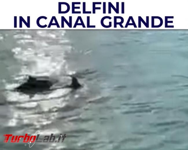 Venezia: delfini sì delfini no? Ormai non si sa più cosa credere... - FrShot_1616507085